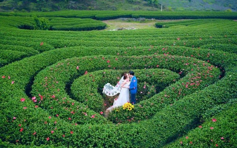 Cặp đôi nổi bật giữa sắc xanh của cánh đồng hoa